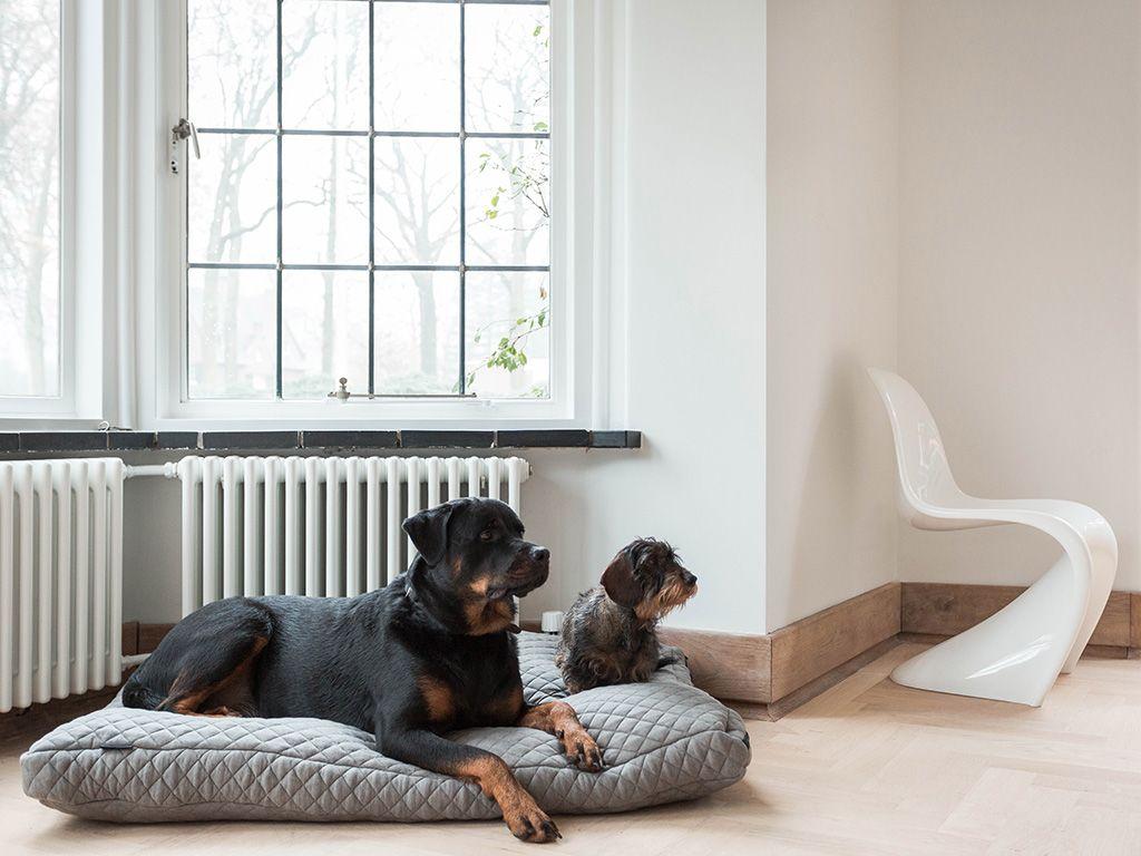 Design Voor Honden : Esschert design gravende hond digger the dog kleurassortiment