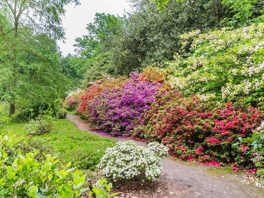 Belmonte Arboretum - Hondsdol