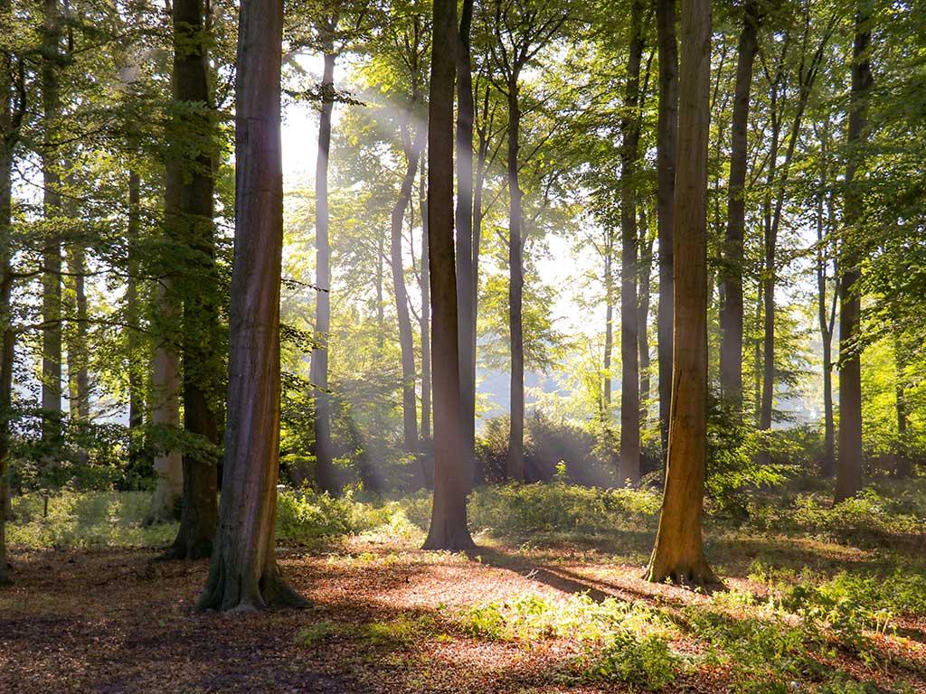 Natuurgebied Beerschoten - Hondsdol